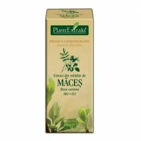 MACES - mladite - gemoderivat - 50ml - PlantExtrakt