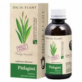 Sirop Patlagina 200ml - Dacia Plant