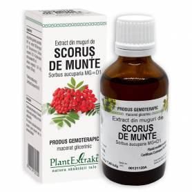 SCORUS DE MUNTE - muguri - gemoderivat, 50ml, PlantExtrakt