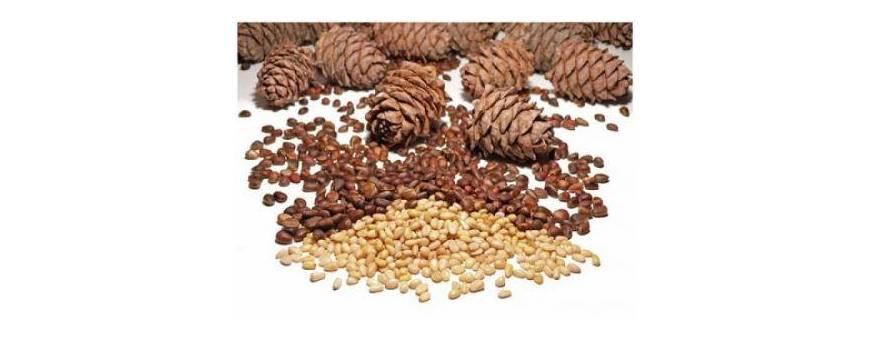 seminte de pin, seminte de cedru