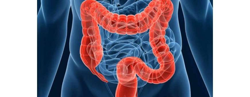 Colon, produse naturiste pentru colon, remedii naturale pentru afectiuni ale colonului.